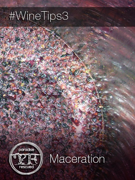 Beautiful Cabernet Franc grapes and juice macerating to make Cloud9