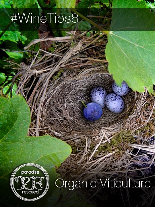 A bird's nest found in the Hourcat Sud vineyard - an amazing symbol for Organic Viticulture