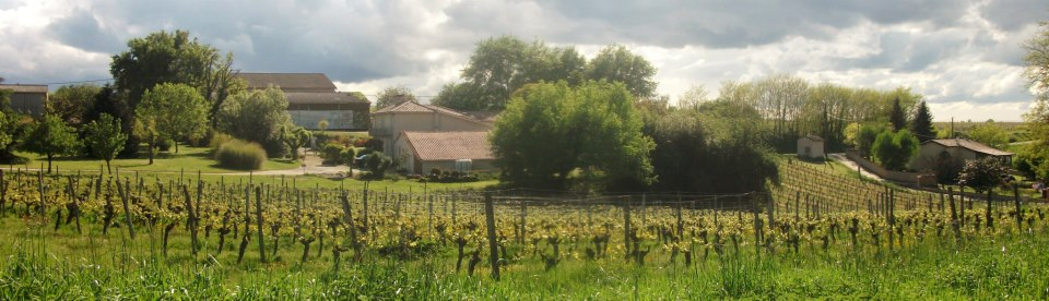 South facing panorama across the Cloud9 Cabernet Franc vineyard of Hourcat Sud Cardan Bordeaux