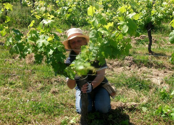 Our vigneronne Pascale provides careful hands on attention to every vine