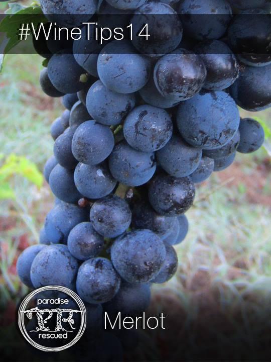 Merlot is the Magician of red grape wine varieties.
