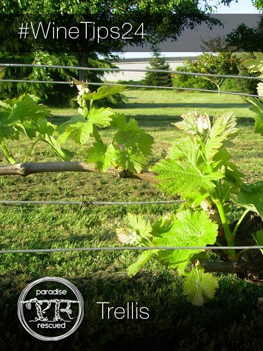 Selecting the appropriate trellis system depends on many local factors including climate.