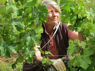 Pascale working hands on with the Cabernet Franc vines