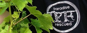 Paradise Rescued has specifically focussed on developing its niche micro-brand.