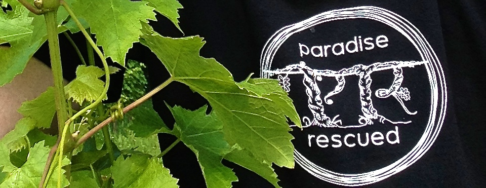 Logo in vines
