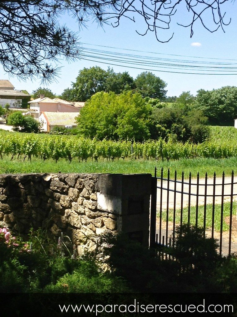 Looking out from the winery gates at Cardan, Bordeaux