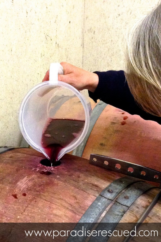 The 2014 wines have run run off into barrel and topped up.