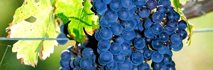 The sun is starting to shine again on Cabernet Franc - a beautiful red wine varietal on the rise
