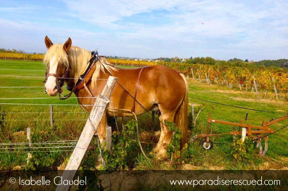Ulysse at the north end of the Paradise Rescued block in Cardan Bordeaux . Ready for the next downhill run.