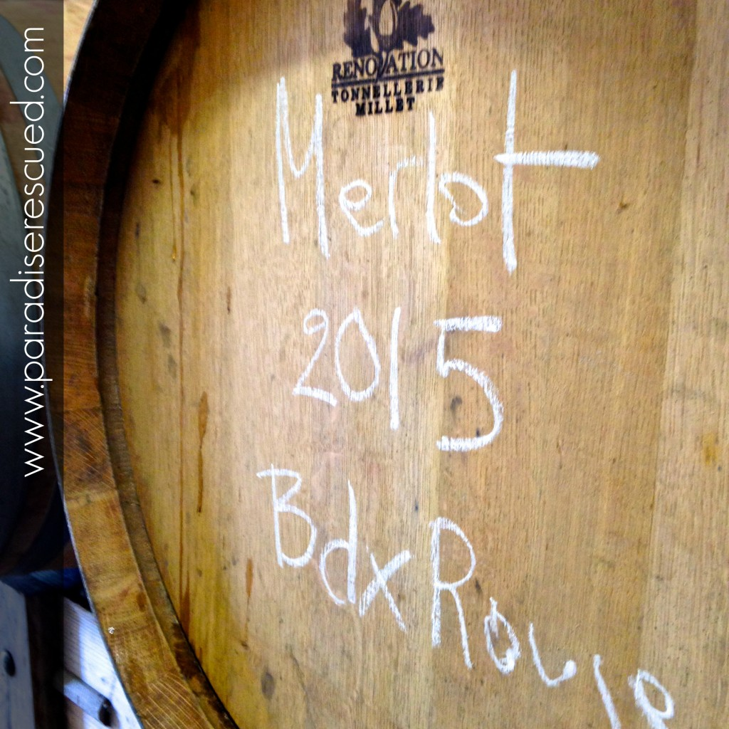 Bordeaux Merlot excelled in 2015. It may well set a benchmark at Paradise Rescued.