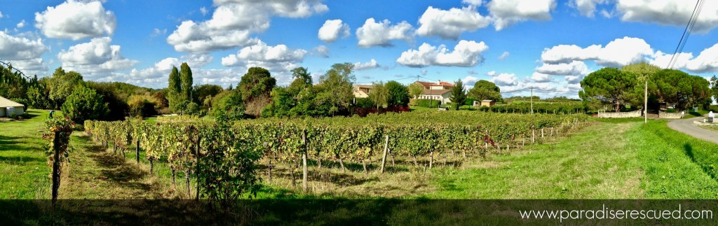 The view across the Paradise Rescued Cabernet Franc organic vineyards following the successful 2016 vintage. The home of Bordeaux B1ockOne varietal Cabernet Franc.