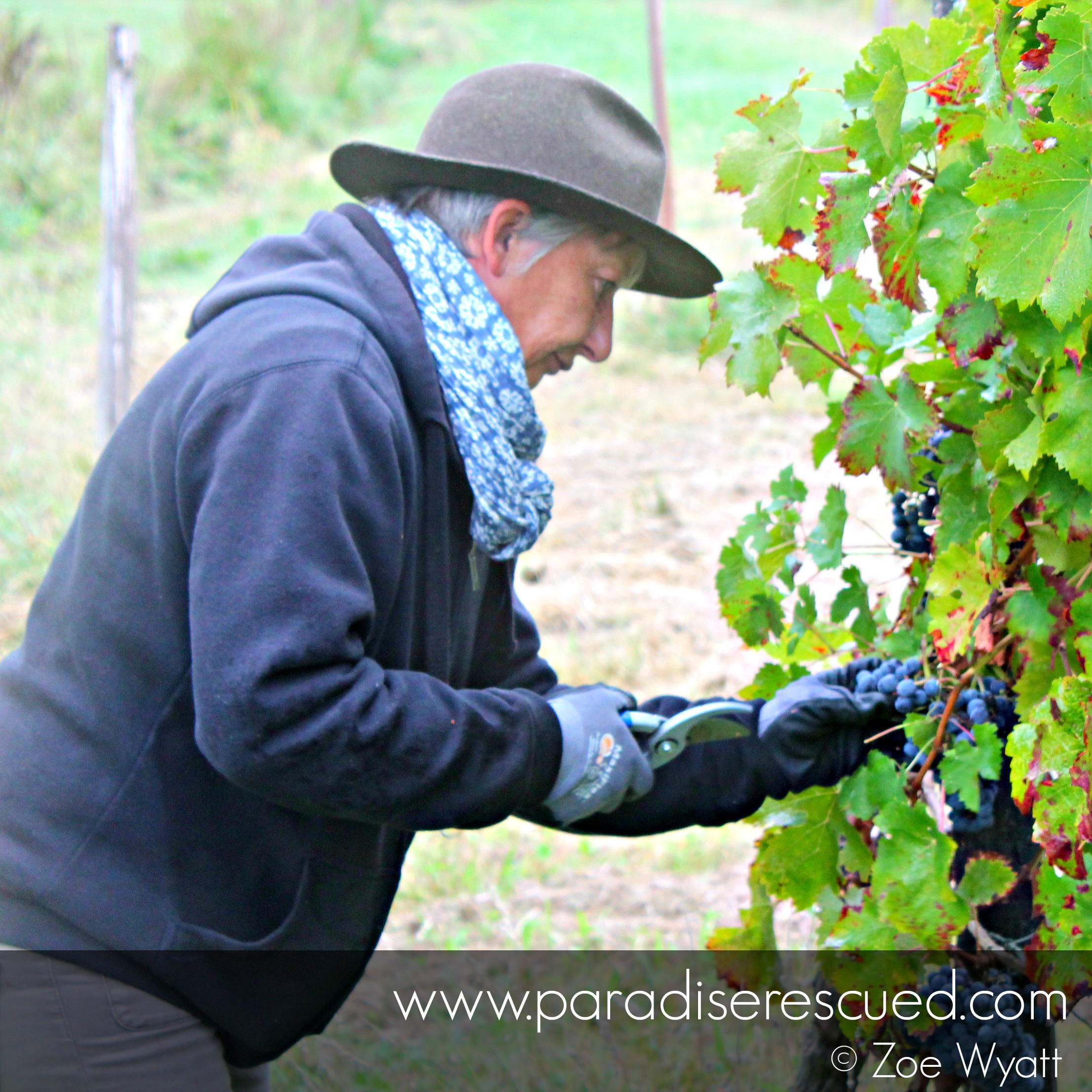 Pascale Bervas - vigneronne at Paradise Rescued Bordeaux