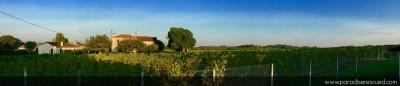 Paradise Rescued organic Merlot vineyard panorama