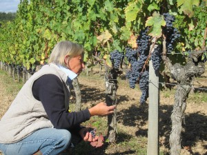 Pascale inspects the results of her organic work in the vineyard.