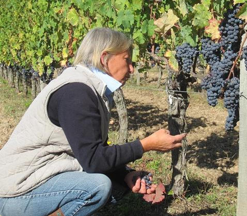 Pascal Bervas, amazing Paradise Recsued vigneron, studies the CabFranc fruit in Hourcat Sud.