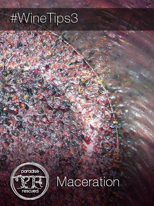 Beautiful Cabernet Franc grapes and juice macerating to make Cloud9