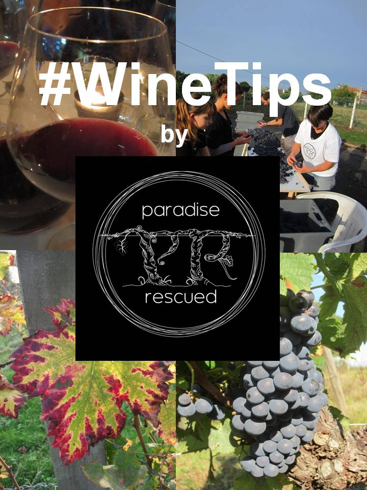 #WineTips by Paradise Rescued will launch this Thursday