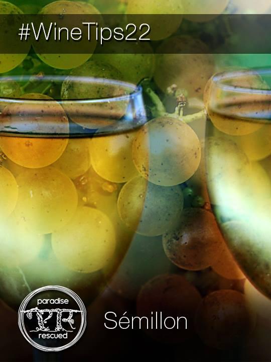 "Sémillon - the ""noble"" white wine grape"
