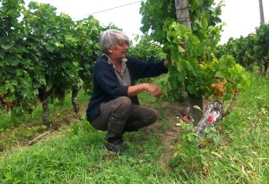 Pascale inspects the Merlot vines