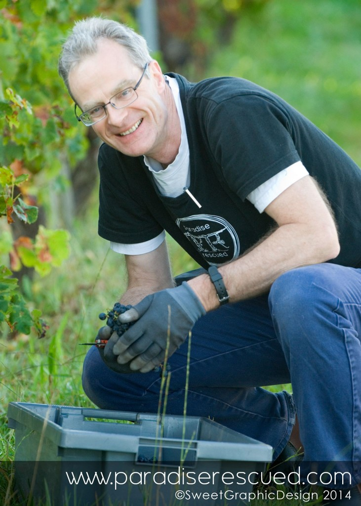 Paradise Rescued Founder Director David Stannard harvesting in the vineyard.
