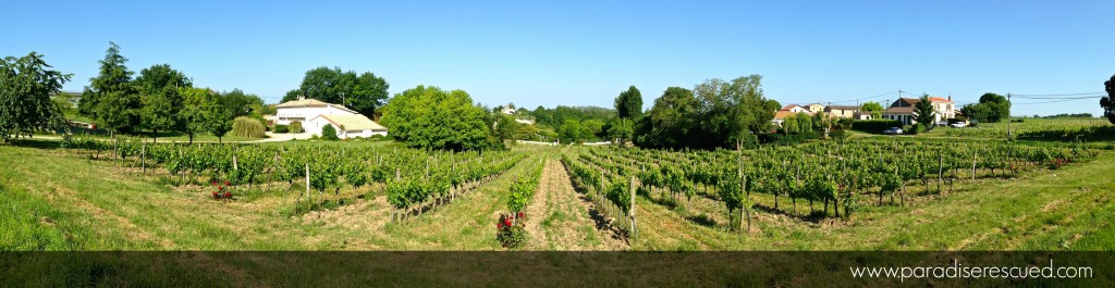 Panorama across the Paradise Rescued vineyards in Cardan Bordeaux France