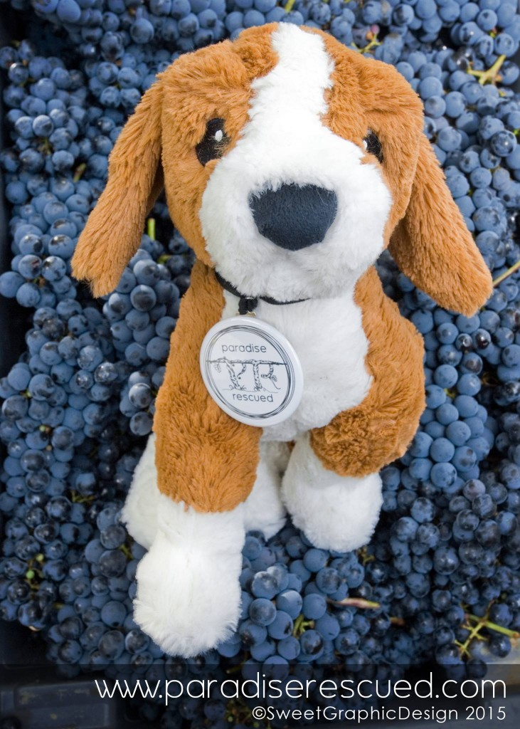 New boy on #B1ockOne - Wags #WineDog fitted right in. He loves a good grape crush!