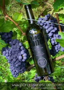 B1ockOne Paradise Rescued Bordeaux #CabernetFranc