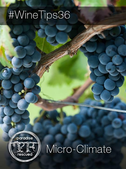 WineTips36