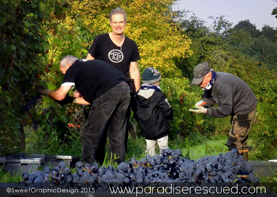 Paradise Rescued owner David Stannard in his Bordeaux vineyard